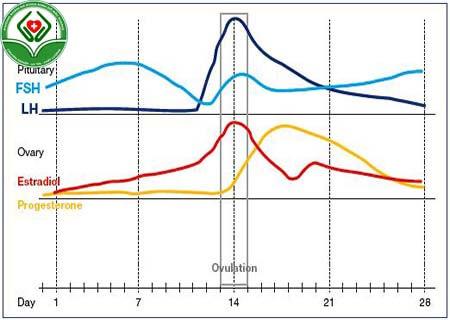 Xét nghiệm hooc môn LH và FSH